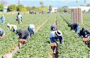 بيان حول النظام الجديد لرسوم تصاريح عمل العمال غير الأردنيين