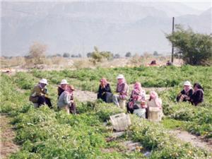 المرصد العمالي يطالب بتوفير متطلبات الحياة اليومية لأسر العاملين بشكل يومي وموسمي
