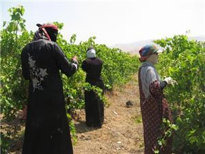 العاملات الزراعيات .. الفقر في زمن الوباء والتغاضي الرسمي