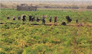 في ظل الحظر الشامل ونظام التصاريح .. ما هو حال مزارعي الأغوار الجنوبية؟