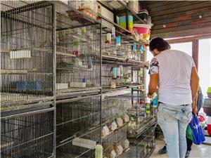 سوق الطيور الشعبي في الزرقاء.. الأضرار