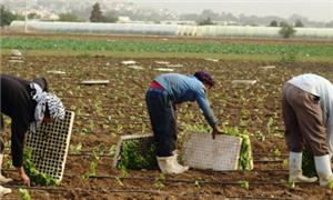 توصيات نيابية بتخفيض رسوم التصاريح للعمالة الوافدة وفتح باب الاستقدام