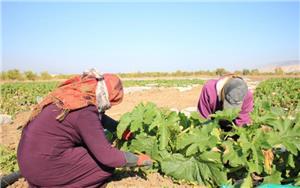استمرار غياب الحماية الاجتماعية يهدد العمالة الزراعية
