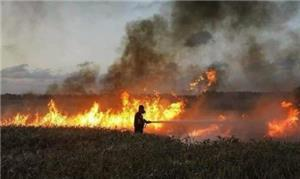 مزارعو وادي الأردن ينتظرون تعويض حرائق الاحتلال
